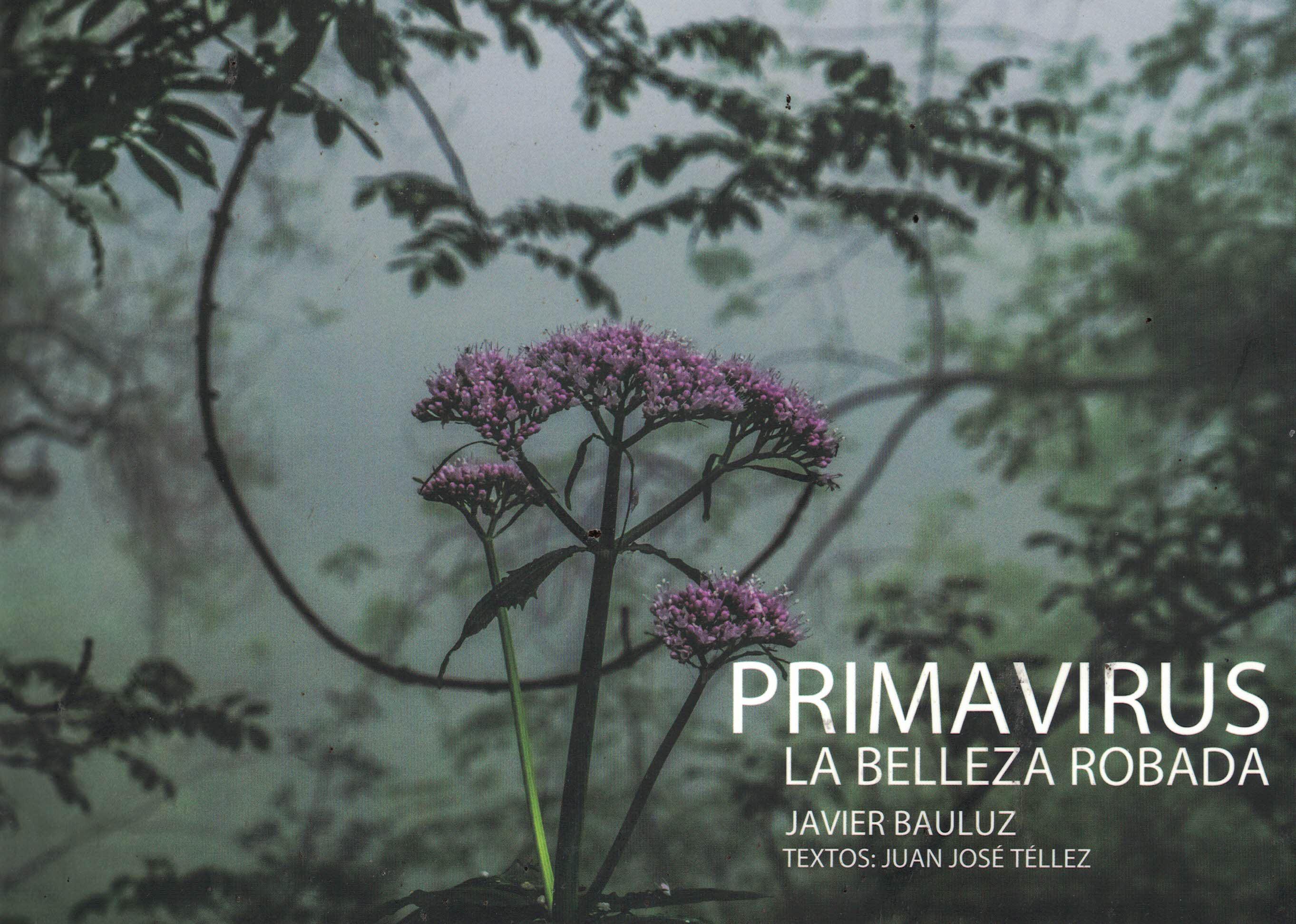 Primavirus «La belleza robada»